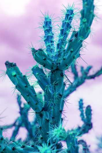 Psycho Cactus III from the Desert Life collection by Coty Montroy