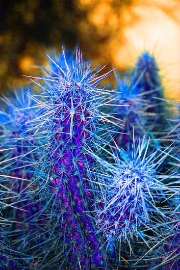 Psycho Cactus I  from the Desert Life collection by Coty Montroy