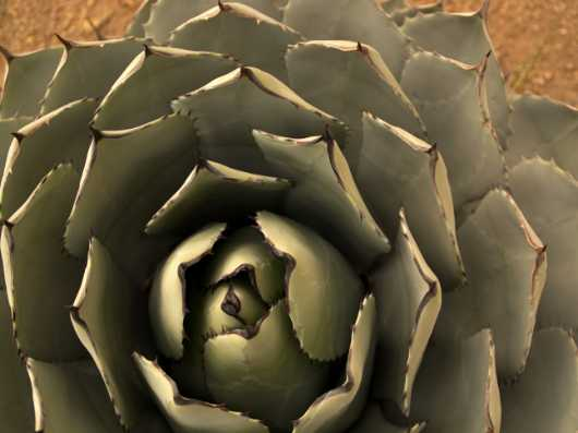 Open bloom from the Desert Life collection by Coty Montroy