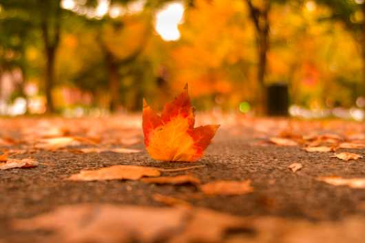 Fall Leaf Macro from the Landscapes collection by TJ Walsh Photography