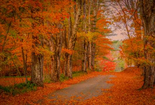 Orange Cemetery Road from the Landscapes collection by TJ Walsh Photography