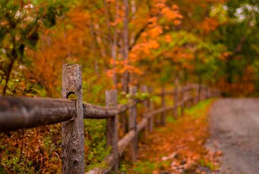 Vermont Fence.jpg from the Landscapes collection by TJ Walsh Photography