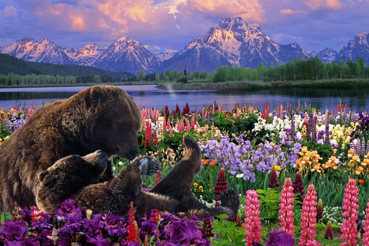 mountain_meadow_bear.jpg from the Mountain Landscape collection by Burton Hadfield