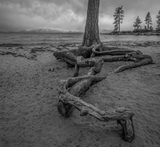 Roots from the The Landscapes collection by Chris Couture Photography