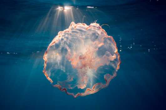 Jellyfish Sunrise from the Jellyfish collection by Paul Dabill Photography