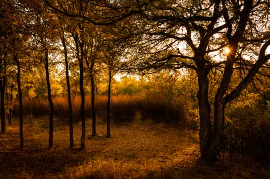 One Fall Morning from the Photographic Prints collection by Charles W. Smith Fine Art