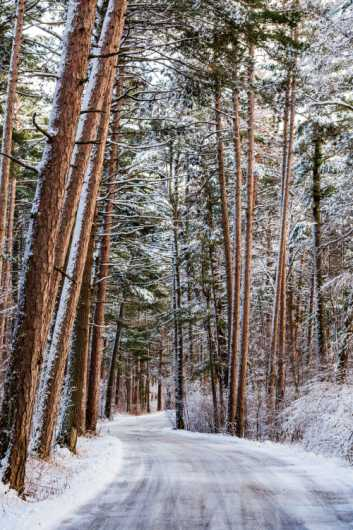 Road Through the Snowy Trees from the For Sale collection by Robert Fortner Photography