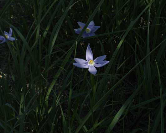 Celestials in Tall Grass from the Images from GJM Nature Media collection by Guy Merchant