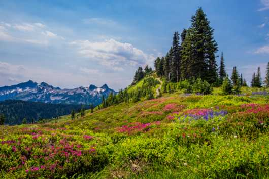 Wildflower Wonderland from the Sights Of Washington State collection by Domestic Wanderer Photography