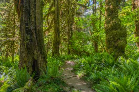 Hoh Rainforest from the Sights Of Washington State collection by Domestic Wanderer Photography