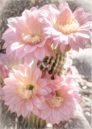 Desert Blooms from the Flora collection by Steve Kelley