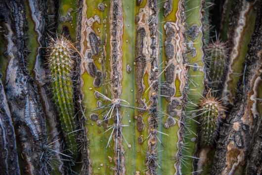 Cactus macro from the Landscapes collection by Rachel Houghton