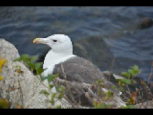 Seagull by Cape Cod Canal  from the Birds collection by jndphoto