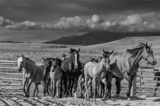 """Round Up"" from the DSN Fundraiser collection by Chris Couture Photography"