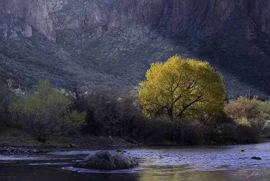 Salt River Landscape from the Desert Foliage collection by Lou Oates