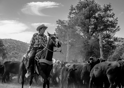 """Move 'Em Out"" from the Western collection by Chris Couture Photography"