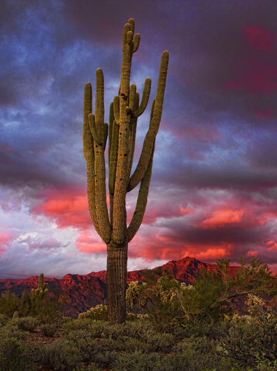 Saguaro Sunset from the Landscapes collection by Richard Milligan