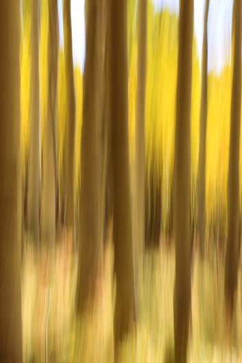 Autumn Soul In The Aisles Of Nature from the Autumn Colors Of The Southwest collection by John Morey Photography - Natural Fine Art Photographics