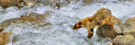 Bearly Feeling The Flow from the My Summers In The Sierras collection by John Morey Photography - Natural Fine Art Photographics