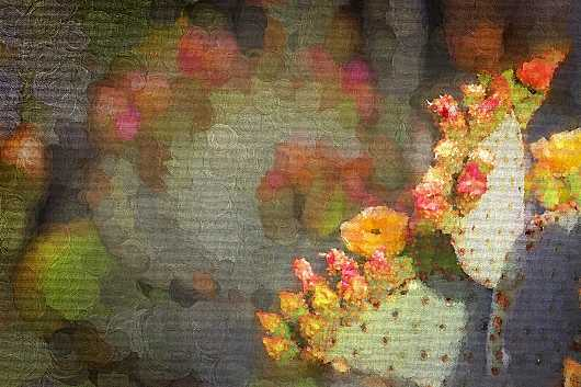 Desert Spring Golden Flowers from the Arizona collection by Ladee K Rickard