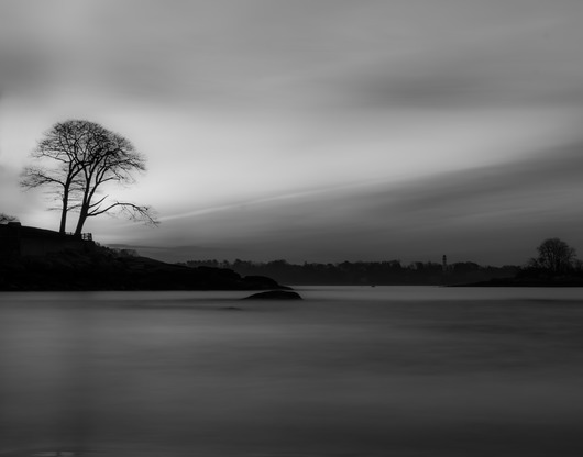 Tree Silhouette  from the Black and White collection by TJ Walsh Photography