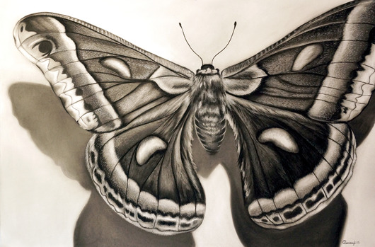 Papillion from the Drawings collection by Courtney Kenny Porto