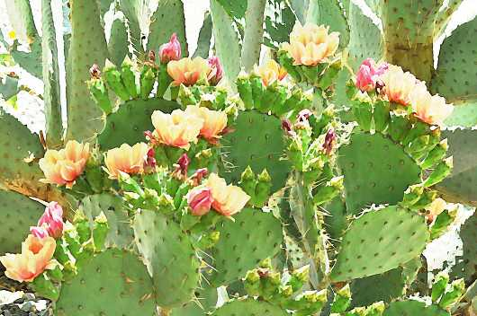 prickly_pear_blooms_in_watercolor.jpg from the Sonoran Flora and Cactus collection by MJ Farmer