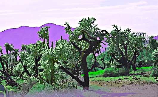 tonto_jumpers_cartoon.jpg from the Sonoran Flora and Cactus collection by MJ Farmer