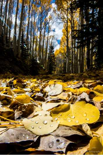 Aspen Leaf Macro 2. Lockett Meadow, Inner basin, Flagstaff, Arizona.  from the Gallery Photos  collection by Andy Rivera