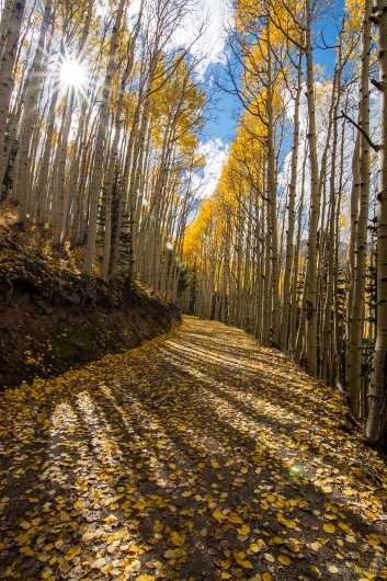 Sunburst through Aspens from the Gallery Photos  collection by Andy Rivera