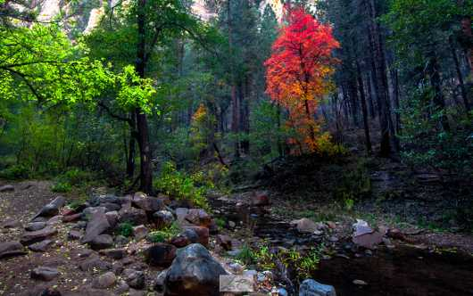 West Fork Fall. Oak Creek, Arizona.  from the Gallery Photos  collection by Andy Rivera