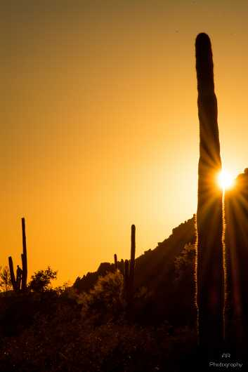 Sonoran Sun Flare from the Gallery Photos  collection by Andy Rivera