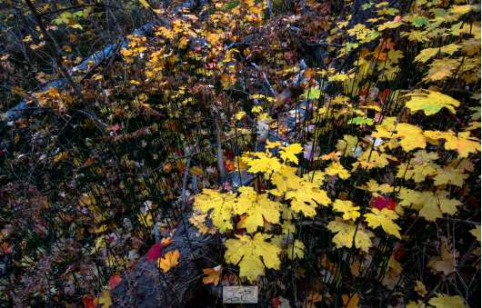 Fall Leaves, West Fork. Oak Creek, Arizona  from the Gallery Photos  collection by Andy Rivera