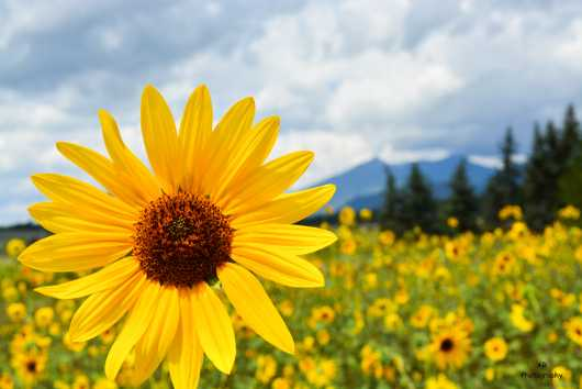 Sun Flower Season. Flagstaff, Arizona from the Gallery Photos  collection by Andy Rivera