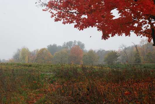 Fall Field, Misty Day from the Fall Landscape  collection by jndphoto