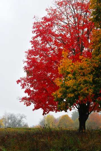 Birds over Fall Tree from the Fall Landscape  collection by jndphoto