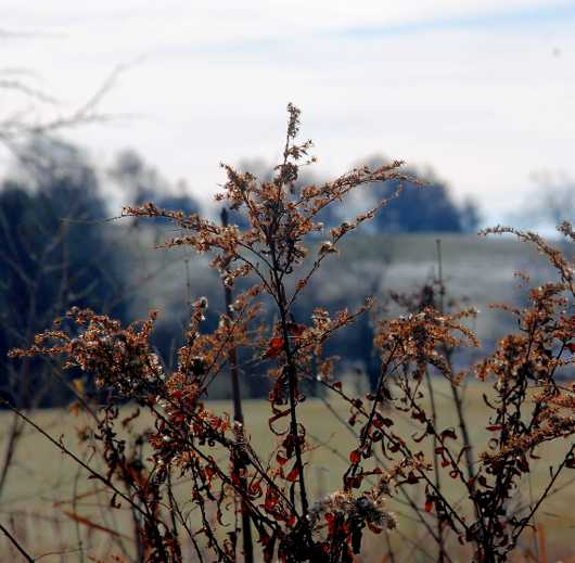 Dried Weeds in a Field from the Winter Landscapes collection by jndphoto
