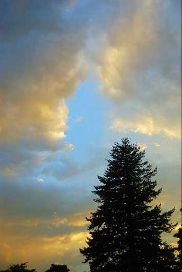 Lone Pine in the Sky from the Higher Being collection by jndphoto